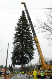 FAIS brings 2015 Christmas Tree to State Capitol